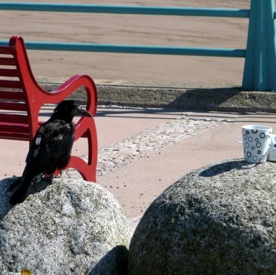 Ein Rabe auf dem Strand in Montrose ( Schottland )