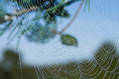 Spinnennetz mit Morgentautropfen