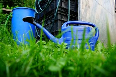 Blaue Gießkanne im Gras