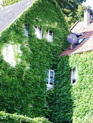 Die Grüne Fassade