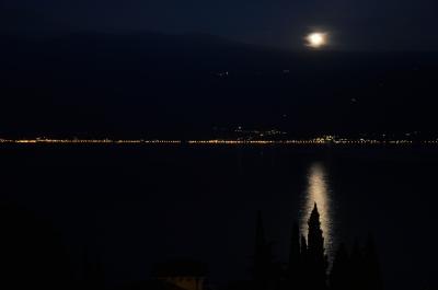 Pinie im Mondschein