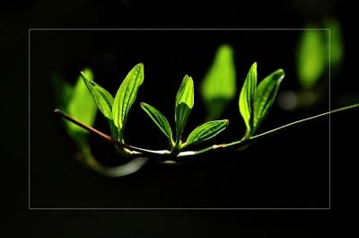 Zartes Grün in Licht und Schatten