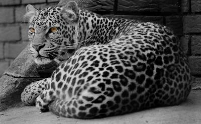 Leopard filterarbeit