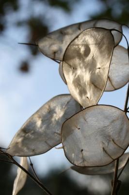 Pflanzenblätter Detail