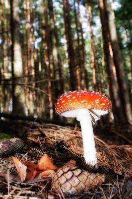 Pilz im Märchenwald