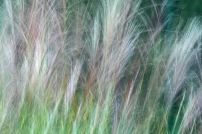 Textur Pampasgras
