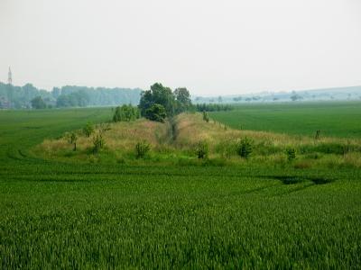 Gewässerrandstreifen an der Altenau