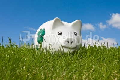Sparschwein im Gras