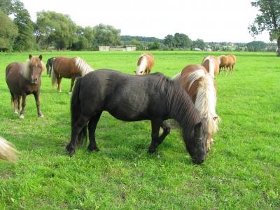 Ponys 2