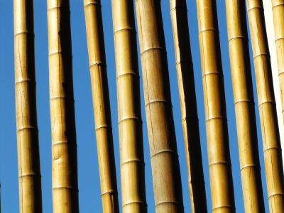 Bambusgitter