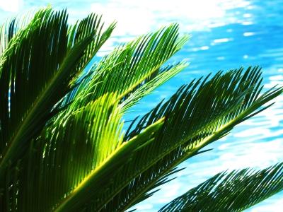 Urlaubs-Sehnsucht mit Pool und Palmen