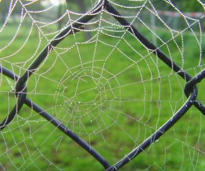 Altweibesommer - Spinnenkunst