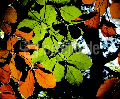 Herbstliche Kontraste