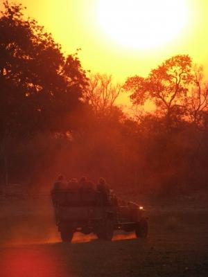 Safari im Sonnenuntergang