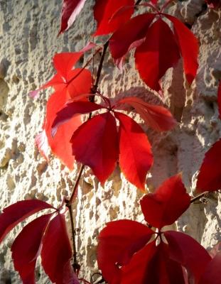 Herbstlaub als Fassadenschmuck