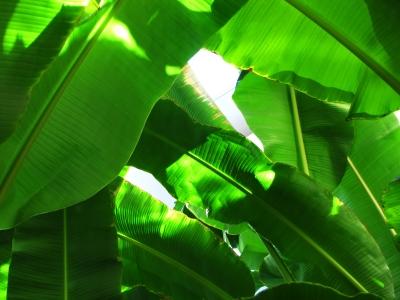 Urwaldgrün