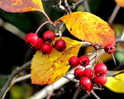 Früchte des Herbstes (Makro)