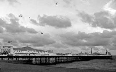 Birds over Brighton