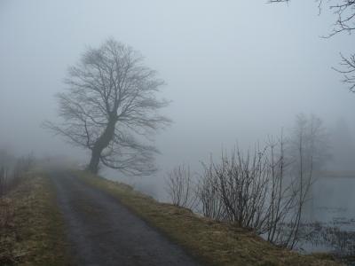 Nebel im Hochmoor