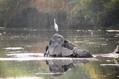 Reiher am Nil 2