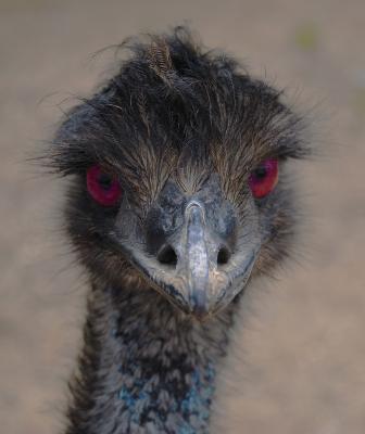 EmuMalle
