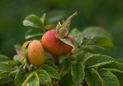 Früchte...