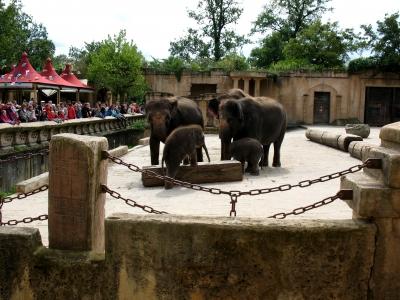 Zoo Hannover Elefantengruppe