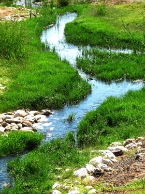 Wasser ist Wachstum und Leben