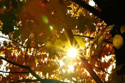 Herbstsonne