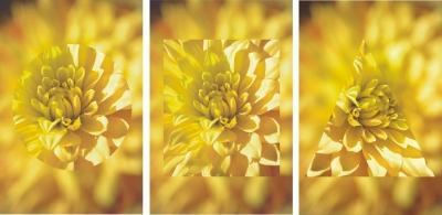 Chrysanthemen-Triptychon