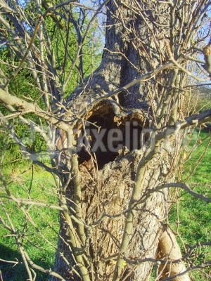 Herzliche Baumgrüße