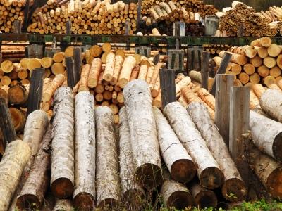 Rohstoff Holz - im Sägewerk