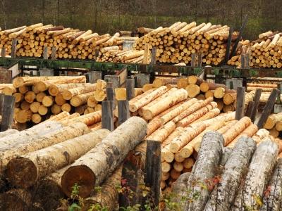 Rohstoff Holz - im Sägewerk_2