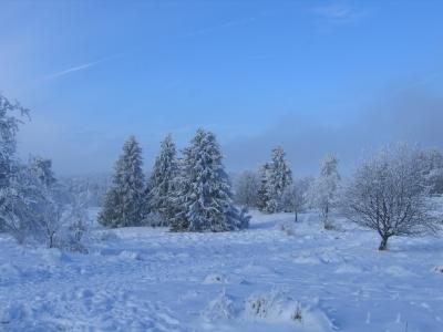 Wandern durch den weißen Winterwald