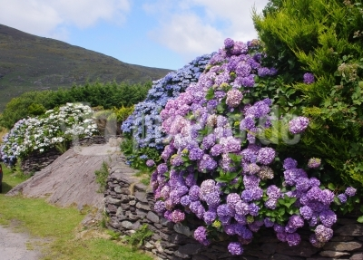 Irlands Farben 1