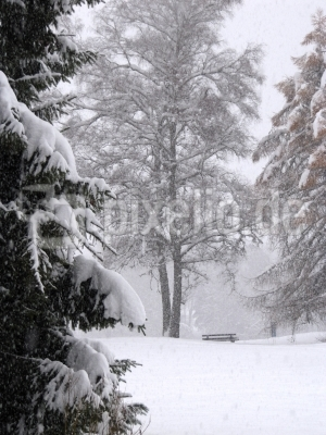 Bäume und Bank im Schneetreiben