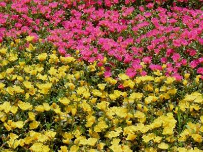 pink-gelbes Blumenbeet