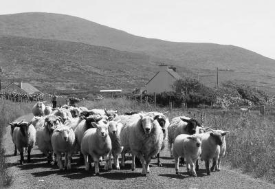 Rush Hour in Irland