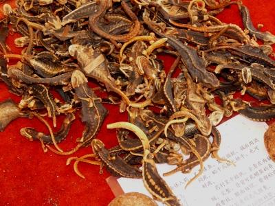 Getrocknete Salamander
