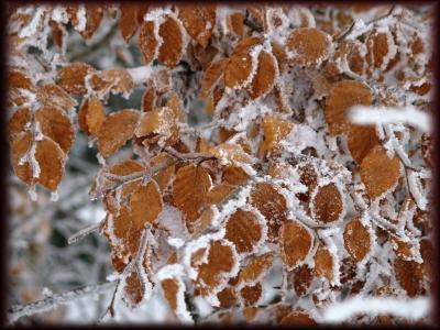 Winterbuche