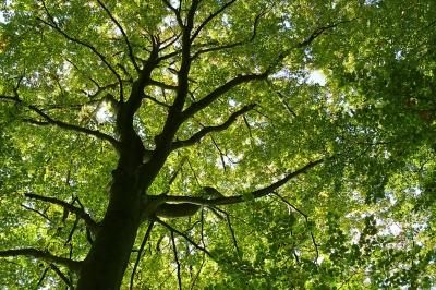 2011 - Willkommen im Jahr der Wälder!