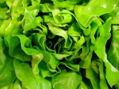 Textur - Kopfsalat