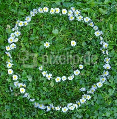 Smiley aus Gänseblümchen