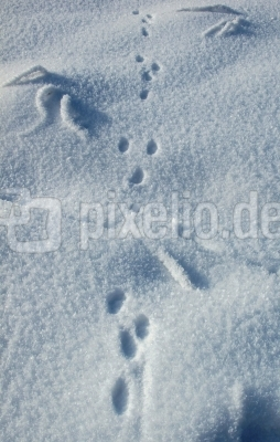 Hasenspur im Neuschnee