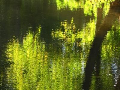 Wasserfarben im Herbstwald