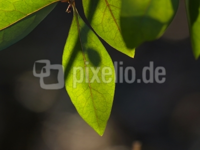green leaves in the light