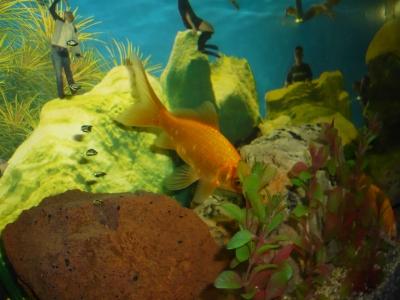 Fisch im Becken