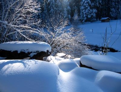 Schnee-Idylle mit Hütte am Wald