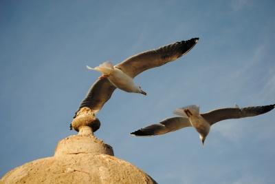 Marokko - Essaouira im Hafen