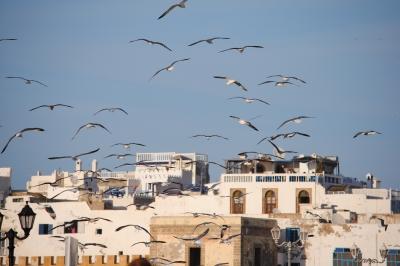 Marokko - Essaouira